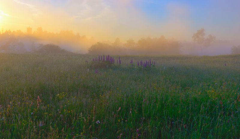 туман,  лето, капельки, роса, пейзаж, раннее утро летнее утроphoto preview