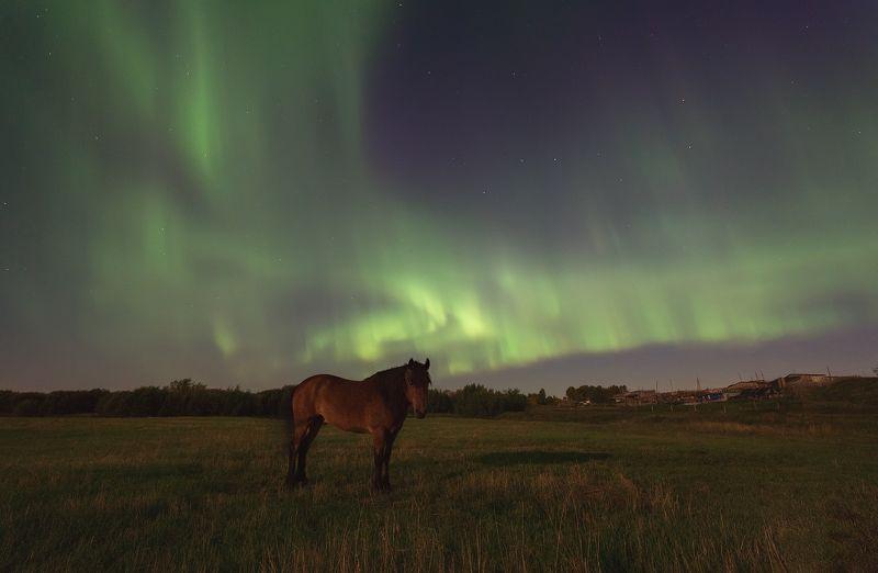 печора,северное сияние,ночь Лошадь северной ночиphoto preview