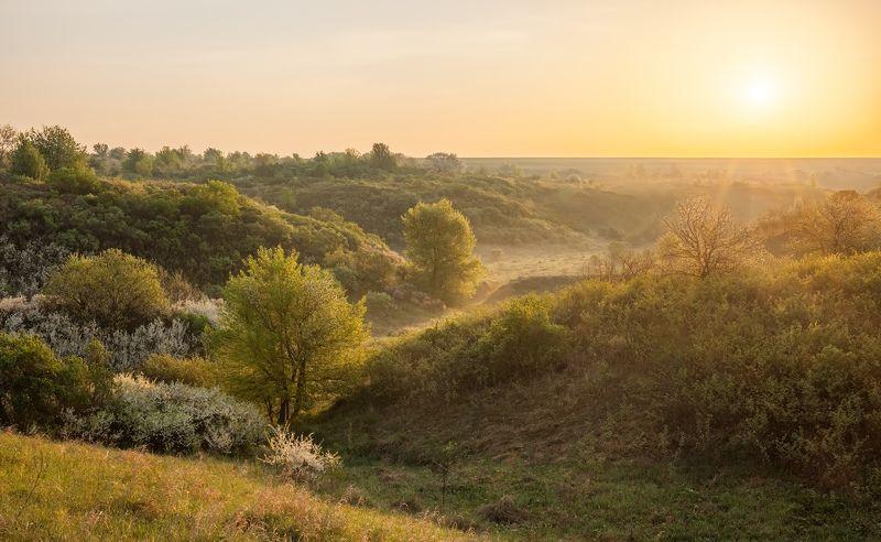 центрально-черноземный заповедник, казацкая степь, курская область, фотопроект, май \