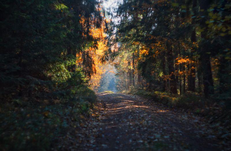 вечер, осень, лес, дорога, Фрагмент осени#2photo preview