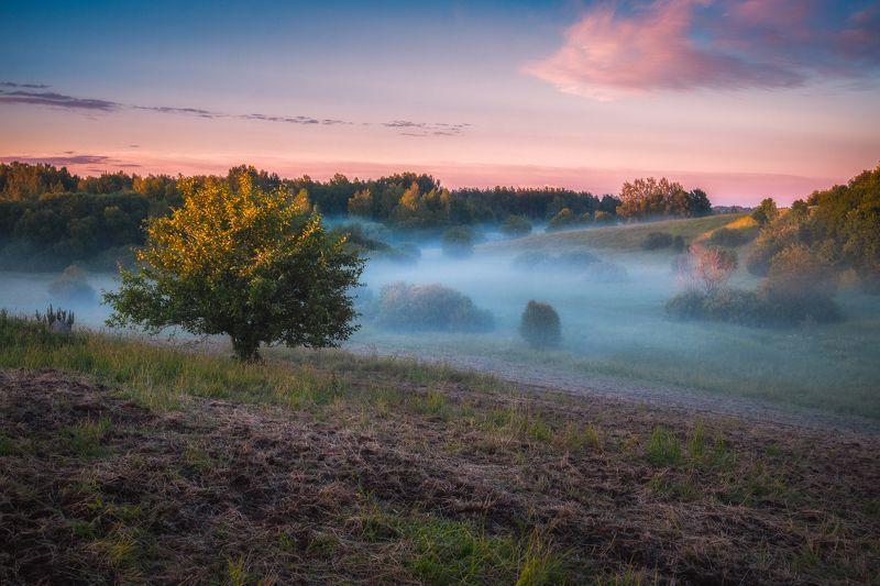 landscape,summer,fog,colours,sunset,пейзаж,лето,хутор Летние вечера Латгалииphoto preview