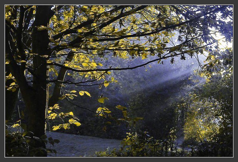 утро, туман, синий Синий туманphoto preview