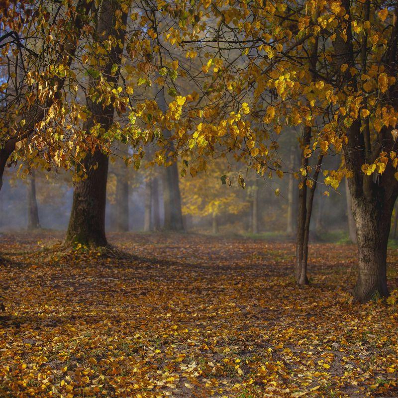 осень парк листва туман Осенний пейзажphoto preview
