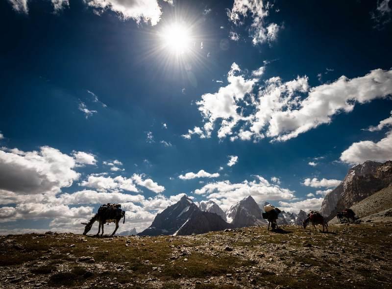 Ослики на перевале  Алаудин.photo preview