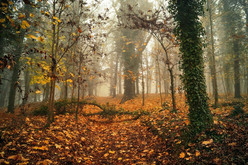 autumn, park, magic, mist, foggy, sony, dranikowski, trees autumn in the parkphoto preview