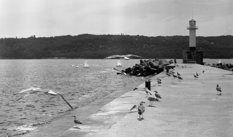 black, white, b&w, film, lighthouse, sea, summer, seagulls, varna, bulgaria, 6x6, medium, format Summerphoto preview