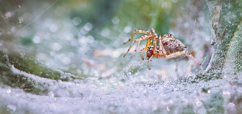 паук,лапы,дерево,цвет,осень,зелень,листва,трава Акварелью по утруphoto preview
