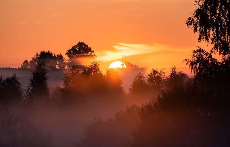 мещёра, утро, розовое утро, туман, розовый туман, поля, деревья, рязанская область Pro красочный рассвет, день IIphoto preview