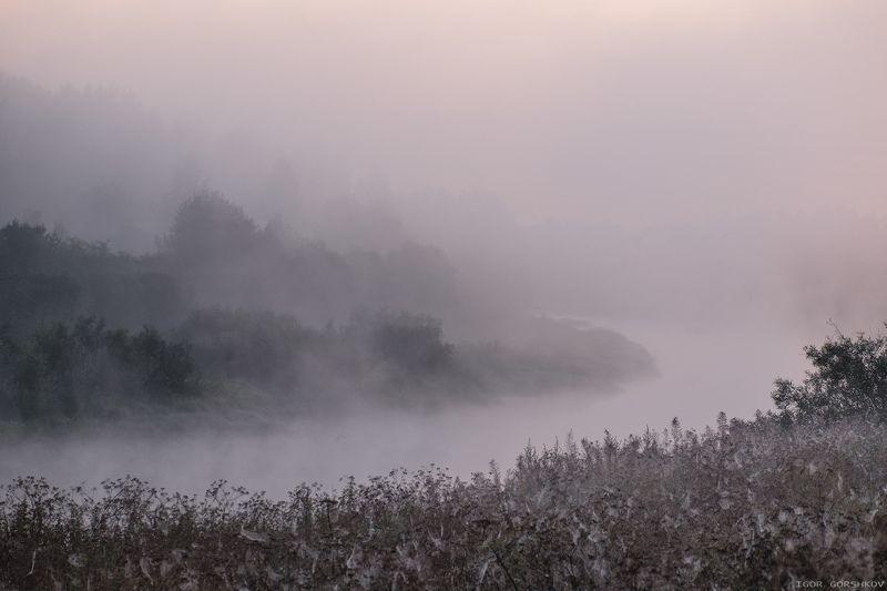 молога,река,утро,рассвет,пейзаж,природа,туман,берег,деревья Река в одеяле туманаphoto preview