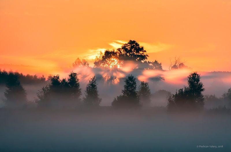 утро, солнце, лучи, туман, розовое утро, розовый туман, поля, деревья, крона, мещёра, рязанская область Pro лучи солнца, пронизывающие утро ...photo preview