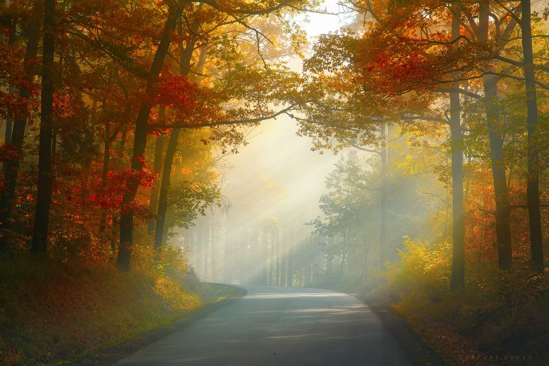 цвет осень,zanfoar,czech republic,colors,trees,road,way,rays,nikon d750,sunshine,sunlight,fog,haze,moody цвет осеньphoto preview