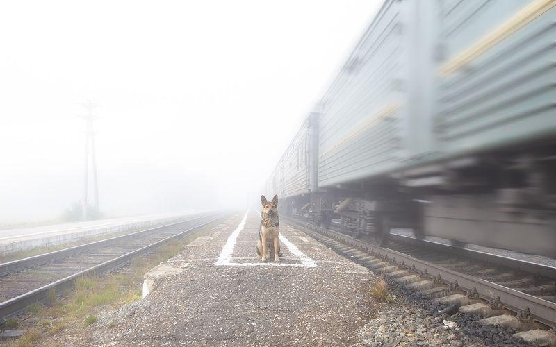 животные,собаки,верность,преданность,север,туман,animals, dogs, loyalty,devotion, north, fog, Верностьphoto preview