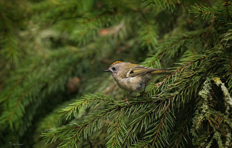 природа, лес, животные, птицы Шустрикphoto preview