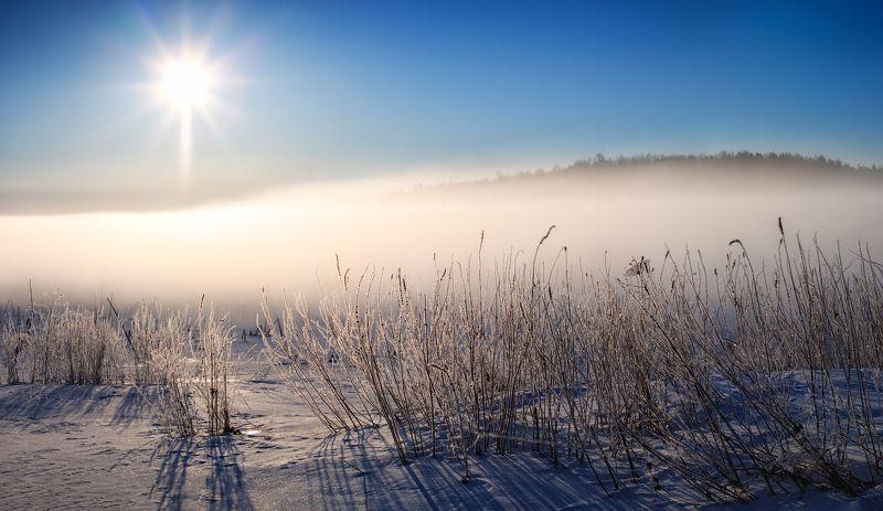 мороз, зима, туман, Зимние травыphoto preview
