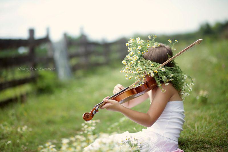 полевые ромашки, девочка скрипачка Ромашкаphoto preview