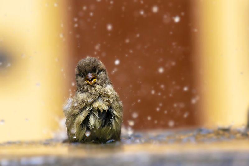 воробей улыбка природа животные птицы Мой старый добрый \