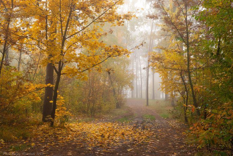 пейзаж, осень, красиво, октябрь, листья, деревья, оранжевый, лес, туман Волшебный лесphoto preview