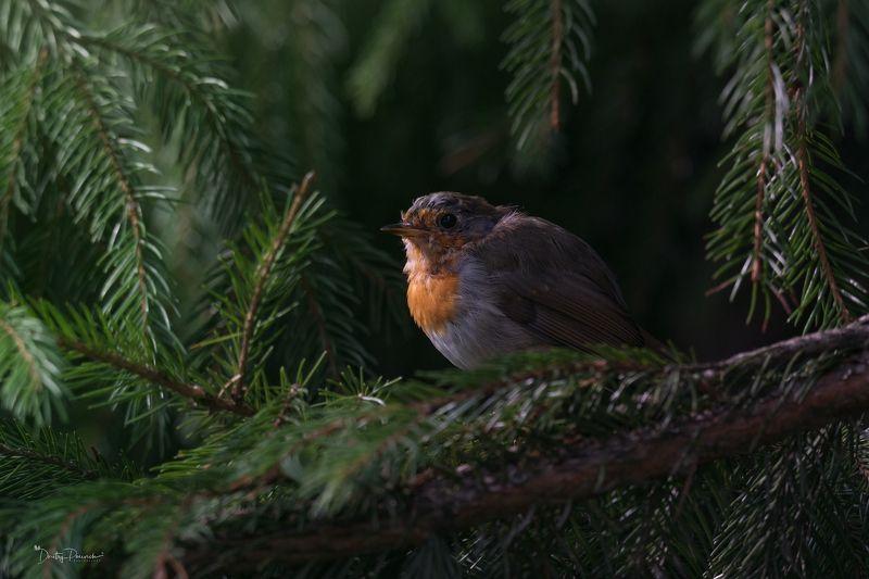природа, лес, животные, птицы Грусть о уходящем летеphoto preview