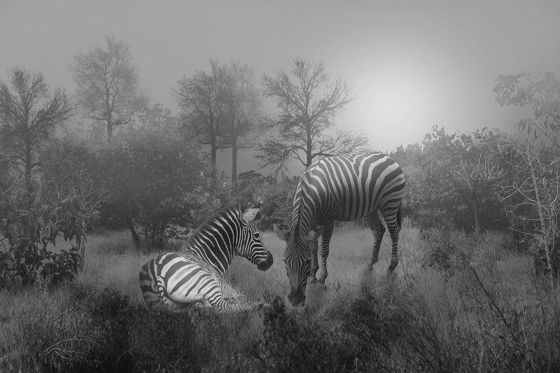 Zebrasphoto preview