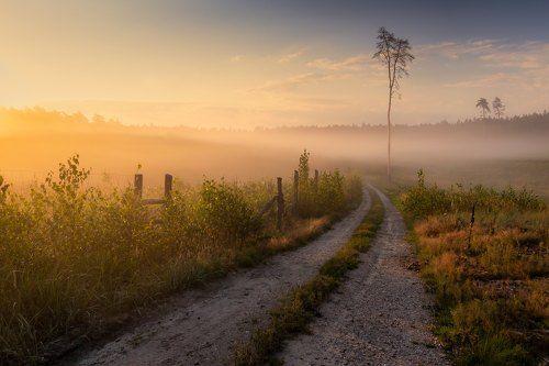 In morning fog