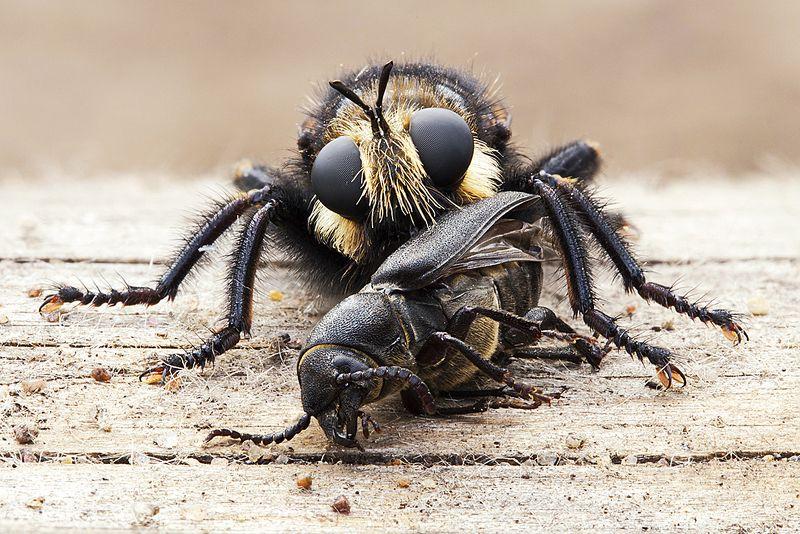 жук, насекомое, макро, природа Жертваphoto preview