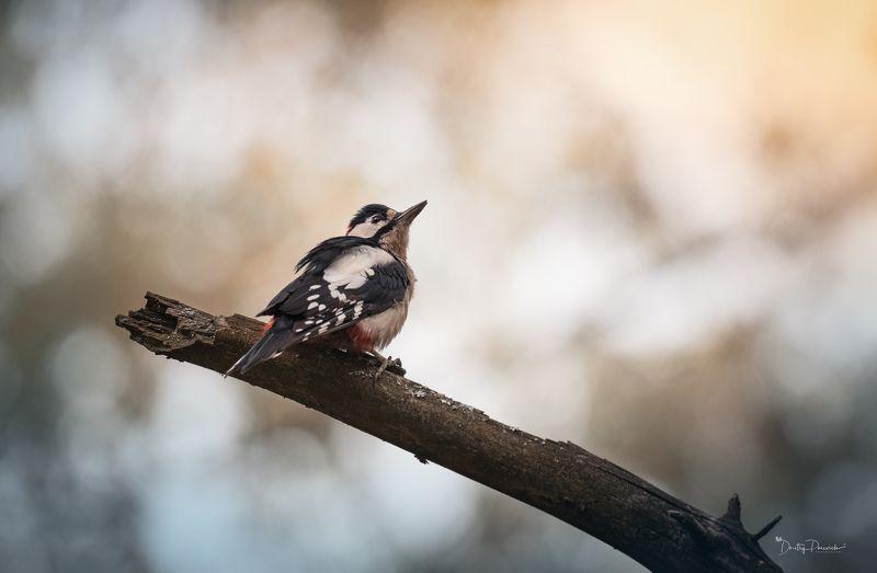 природа, лес, животные, птицы Мечтатель :)photo preview