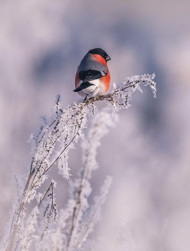 Однажды, в студеную зимнюю поруphoto preview