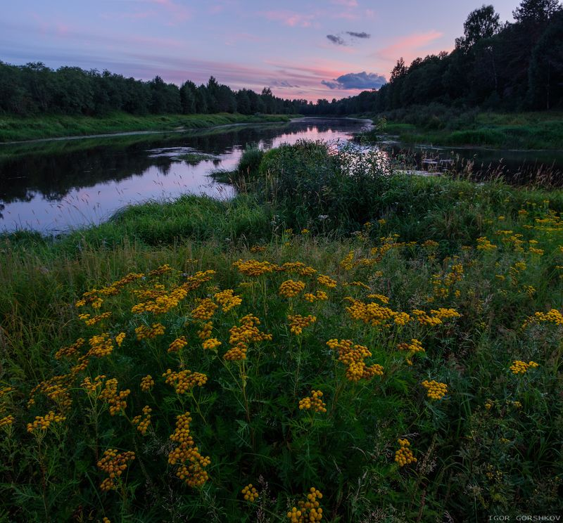 молога,река,закат,пейзаж,природа,берег,трава,остров,цветы,пижма,панорама Вечер на речном островеphoto preview