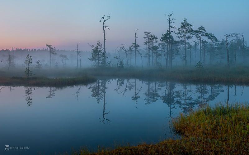 фототур, ленинградская область, деревья, сосна, болото, рассвет, туман, отражение, покой, озеро, заря, лето, небо, Заря: акварель болота.photo preview