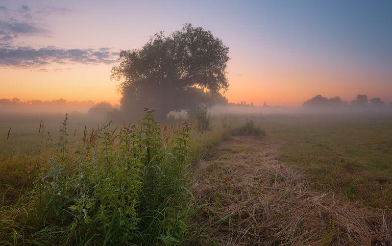 дерево, лето, луг, облака, панорама, рассвет, свет, травы, туман, colors, meadow, clouds, grass, Landscape, light, panorama, Summer, sunrise, tree, fog, foggy, misty июльский рассвет ..photo preview