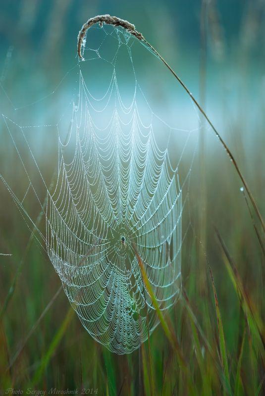 макро, паутина, паук, лето, август, красиво, утро, насекомое, украина Сети паукаphoto preview