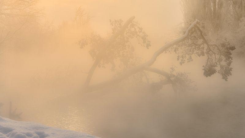 утро, туман Растворяясь в утреннем туманеphoto preview