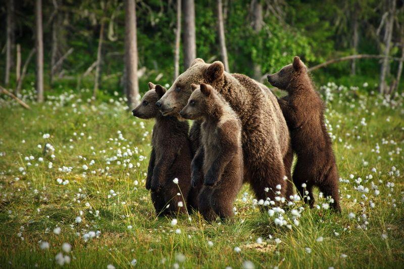 Медвежьи истории - 2photo preview