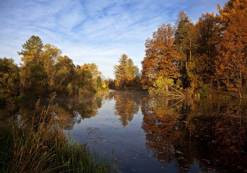 осень парк листва пруд Петербуржская осеньphoto preview