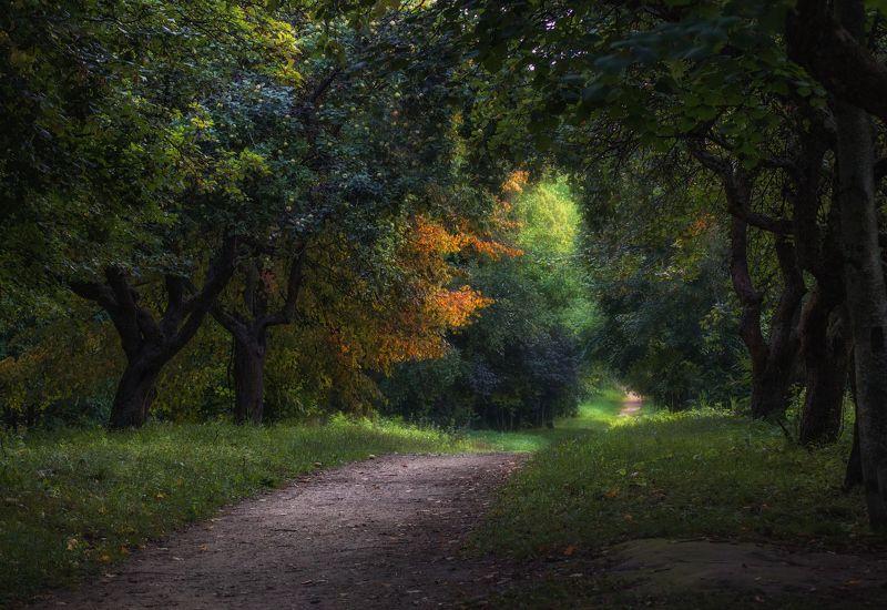 деревья, дорога, сад, Садphoto preview