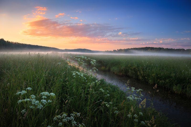 рассвет, туман, поле, Рассвет в июнеphoto preview