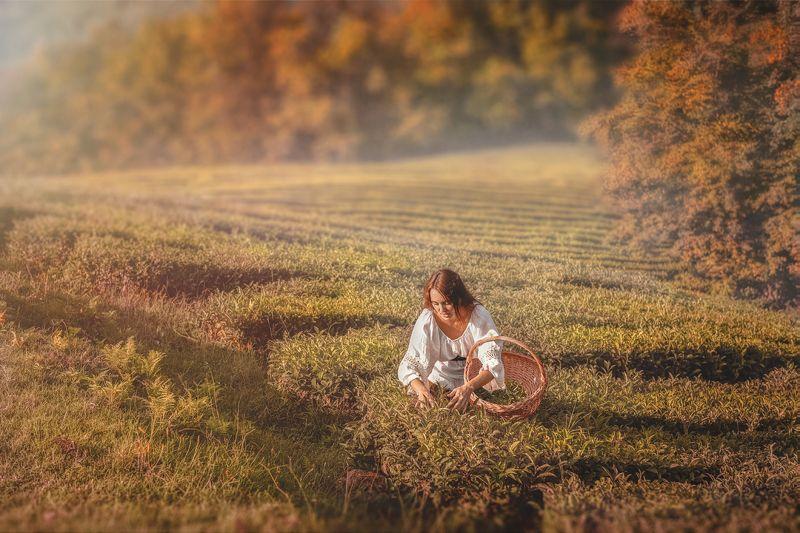 осень чай селянка девушка корзина поле плантация солнце закат Осеньphoto preview