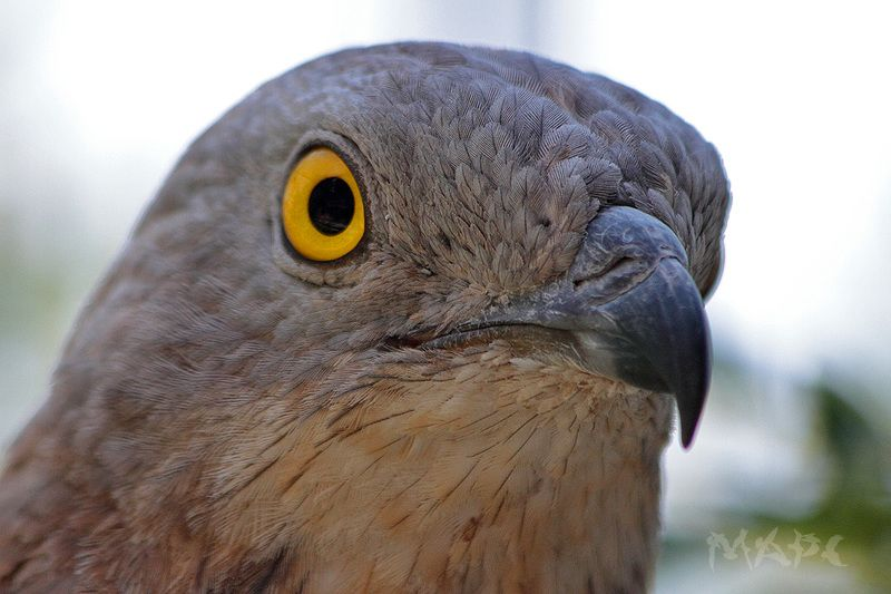 животные птицы осоед сафари-парк Осоедphoto preview