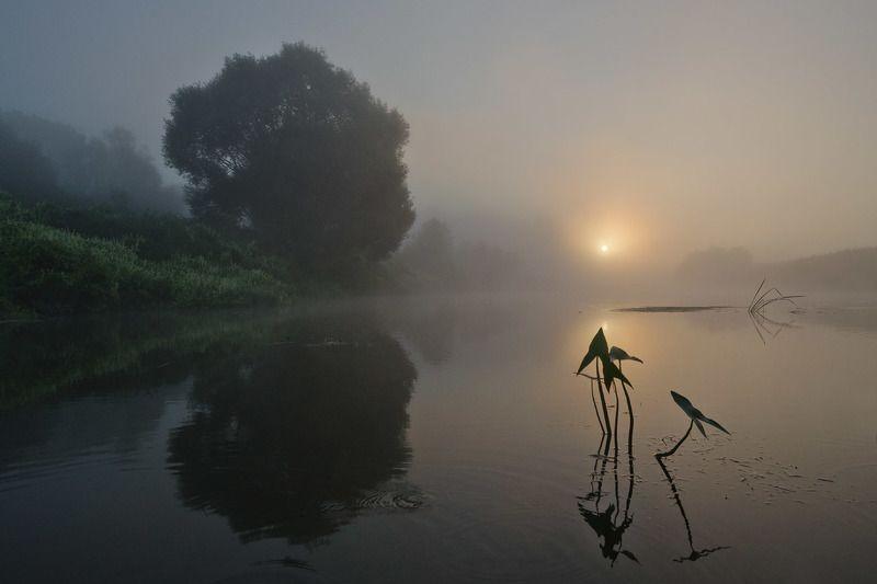 утро, рассвет, река, упа, пейзаж, якшино Утро стрелолистаphoto preview