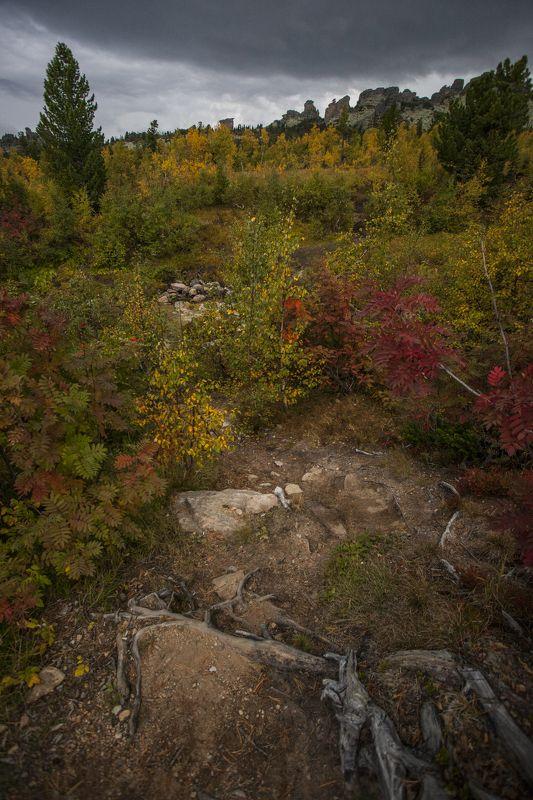 осень, пейзаж, природа Золотаяphoto preview