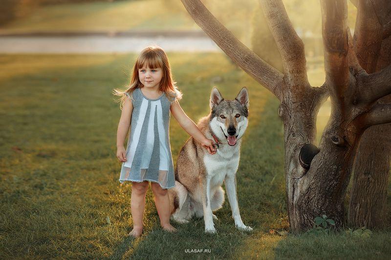 портрет, лето, девочка, girl, summer, волк, закат, вечер, животные, собака, dog, wolf, друзья, солнышко, лучи, happy, happiness Девочка с волкомphoto preview