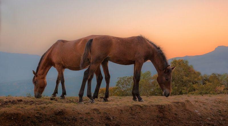 вечер, крым, кони Две грацииphoto preview