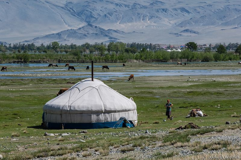монголия, алтай, горы, юрта, природа, пейзаж, лето,  mongolia, altay, mountains, yurt, nature, landscape, summer Жизнь кочевниковphoto preview