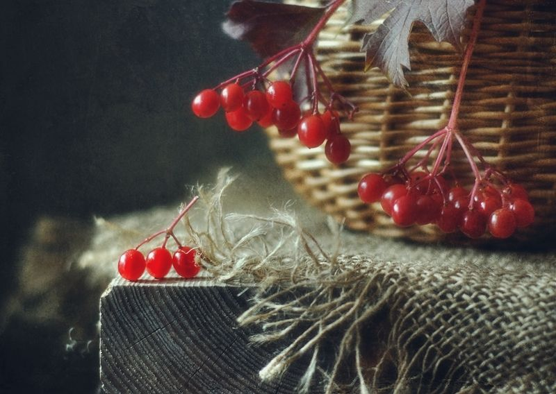 натюрморт,калина,осень калина красная )photo preview