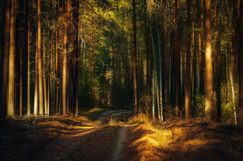 фото, природа, пейзаж, лес, лето, закат По мотивам Шишкинаphoto preview