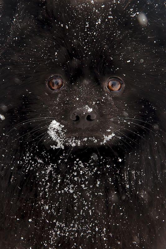 друг собака черный зима глаза Другphoto preview