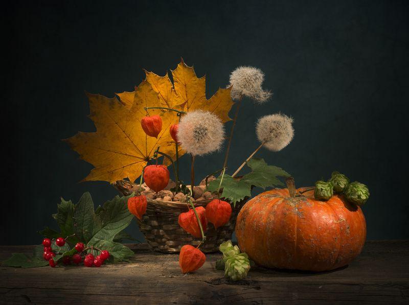 листья,одуванчики,калина,натюрморт,осень,физалисы,тыква Теплая осеньphoto preview