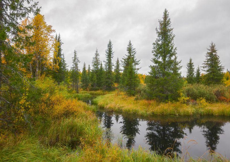 печора,коми,лес Осень крайнего севераphoto preview