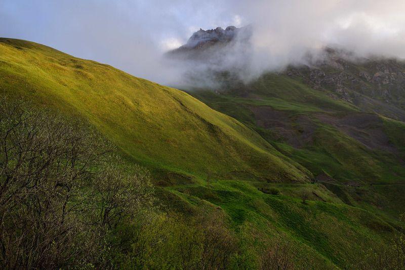 Туман, первые листочки и весенняя траваphoto preview