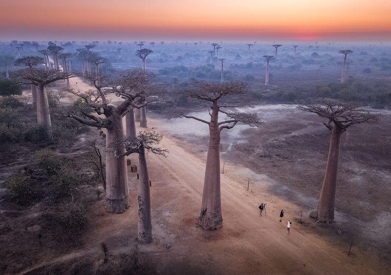 Мадагаскар, баобабы, дрон, пейзаж, фототур В лесу гигантских деревьев...photo preview
